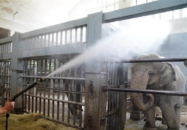 """(社会)(5)上海:动物园里的""""清凉夏日"""""""